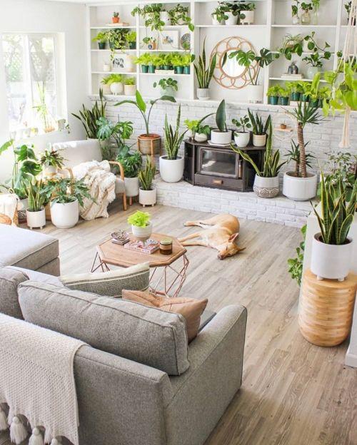 dekorasi tanaman diruang tamu