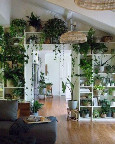 photos plant di ruang tamu